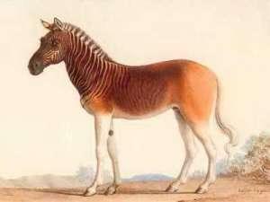 20a01303a4Quagga.jpg 10 Spesies Hewan yang Menakjubkan yang telah Punah