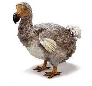 dodo bird 10 Spesies Hewan yang Menakjubkan yang telah Punah