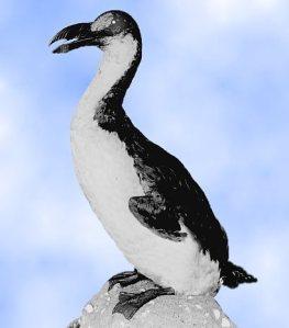 great auk.48115507 std 10 Spesies Hewan yang Menakjubkan yang telah Punah