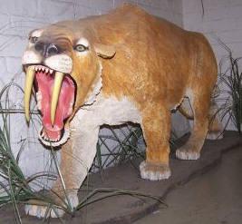 smilodondisplay 10 Spesies Hewan yang Menakjubkan yang telah Punah